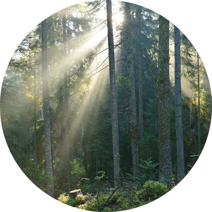Nachhaltige-Waldwirtschaft